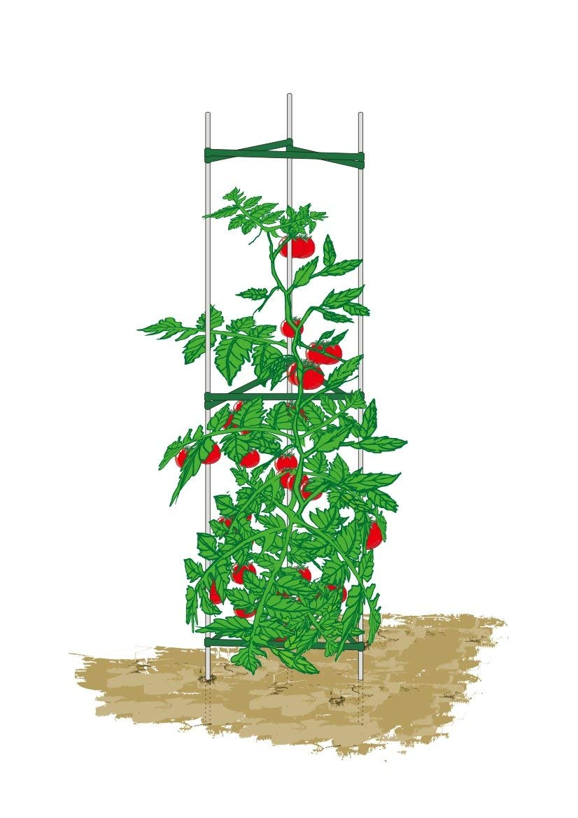Mr.Garden, Plant Cage, Sturdy And Durable, 5Ft (3)
