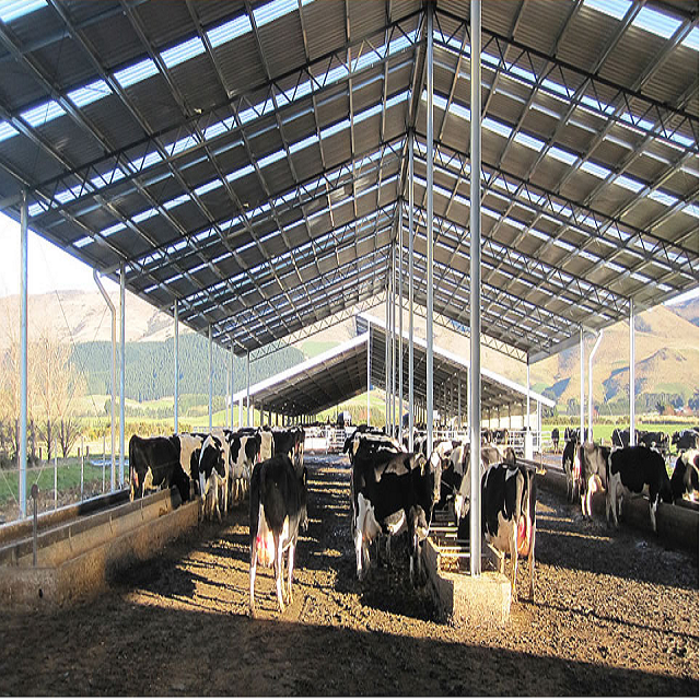 Steel Structure Farm Design Dairy Cows Cattle Barn Shed
