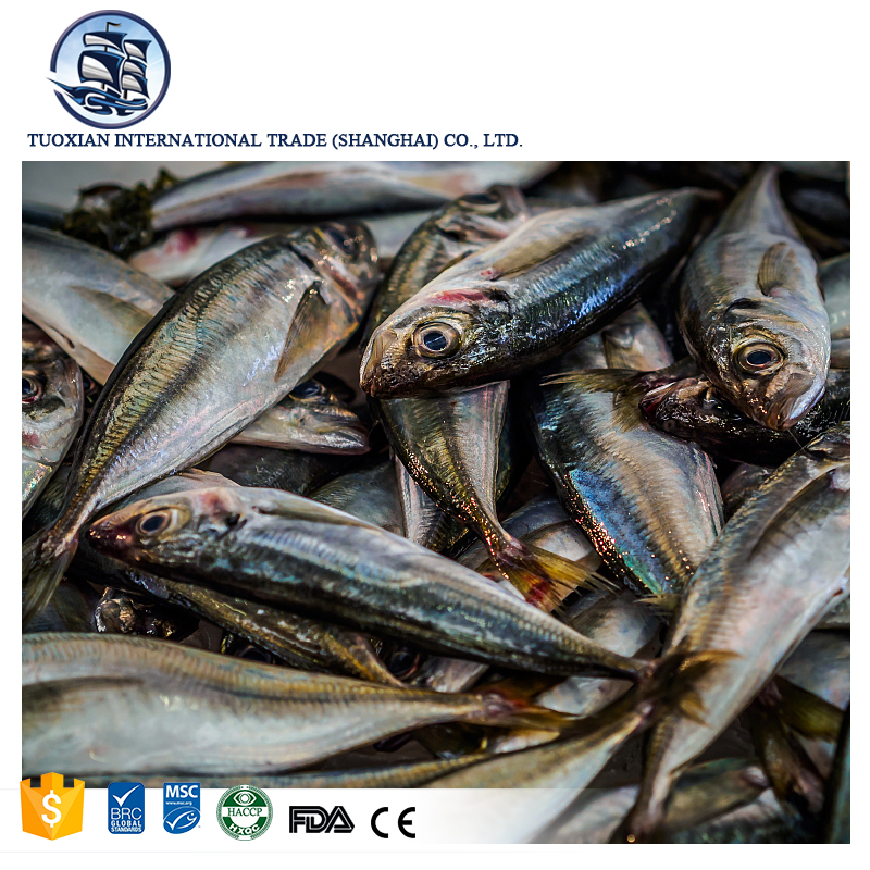 Pacific fresh blue mackerel price buy frozen fish online