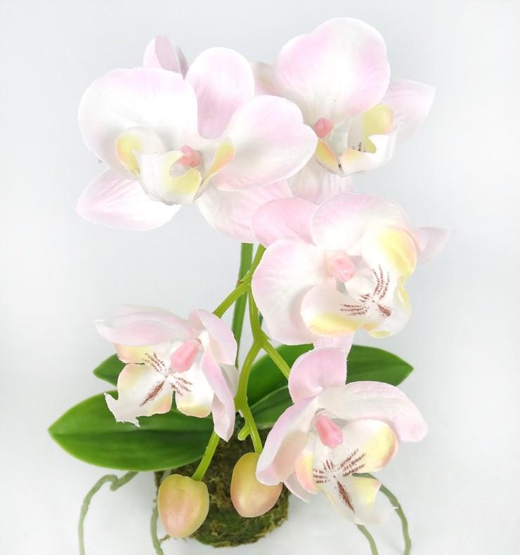 orchidee 111