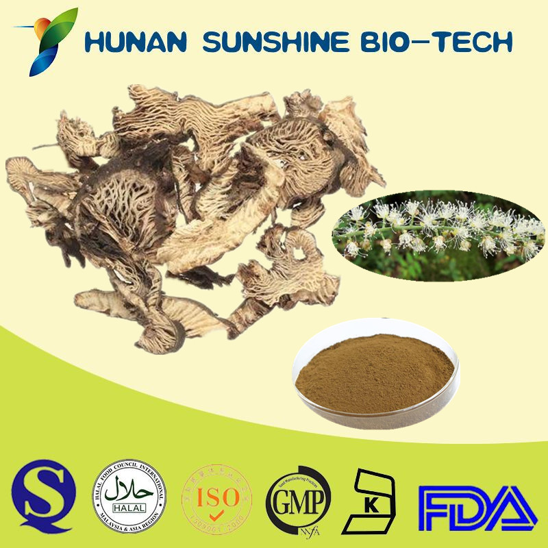 Snake Root Extract / Cimicifuga Racemosa Extract / 2.5% Triterpene Glycoside