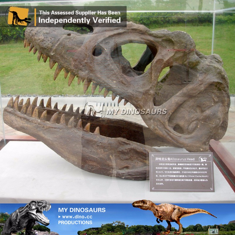 MY Dino-M21 Cheap dinosaur skeleton fossil antique replicas for sale