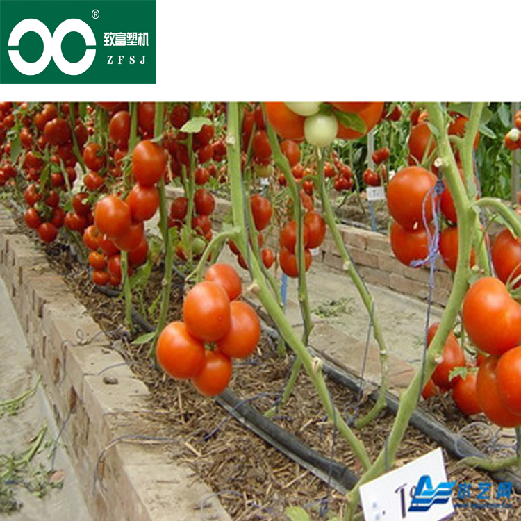 Agricultural water-saving single-sided maze irrigation hose