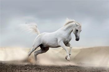 Sıcak Satış At Kafası Boyamabeyaz Soyut At Yüz Boyama Buy At Baş