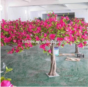 Magnolia Bonsai Tree Sale Magnolia Bonsai Tree Sale Suppliers And