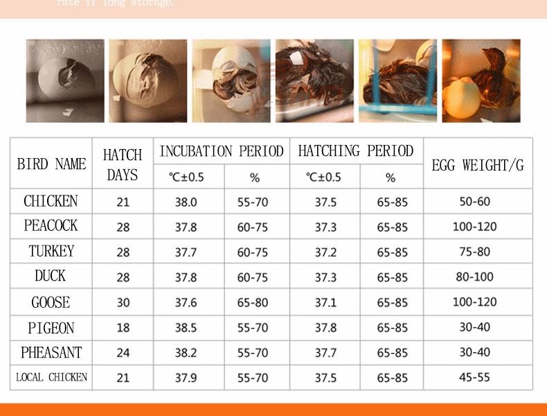 2019 HHD CE + FCC Marcou a Incubadora de Ovos de Galinha / Máquina Incubadora / Incubadora de 56 Ovos