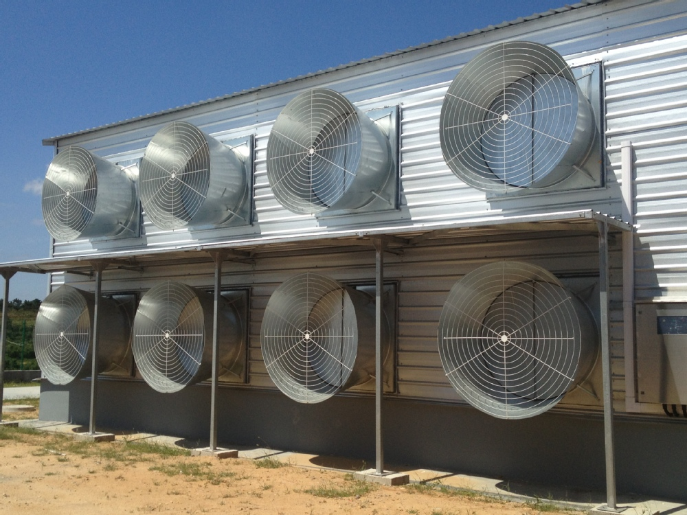 Prefabricated Steel Frame Yellow Door Poultry House