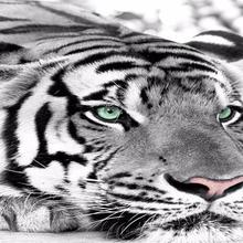 Buy White Tiger Wallpaper And Get Free Shipping On Aliexpress Com