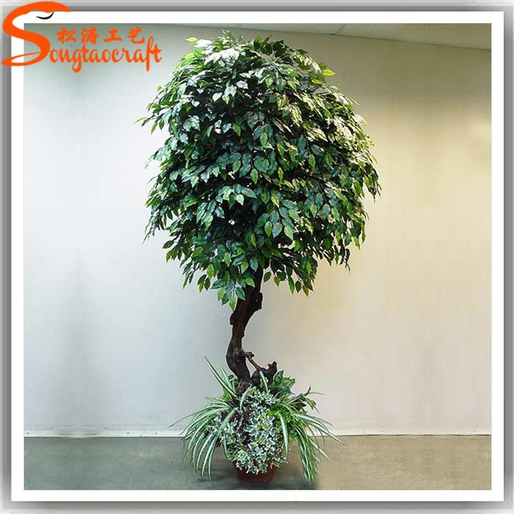 Factory direct evergreen chinese banyan bonsai tree price fake ...