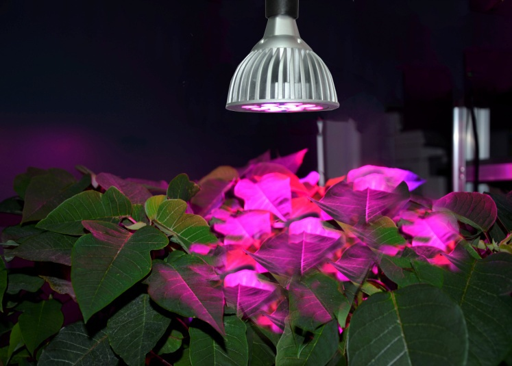 Ebay Thailand 3 Years Warranty 560w Sp113d Par 38 Led Grow Light ...