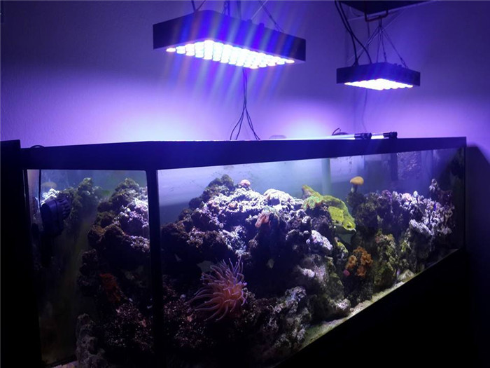 Dimmable Full Spectrum 165w Led Aquarium Lights (55x 3w)fish Tank ...