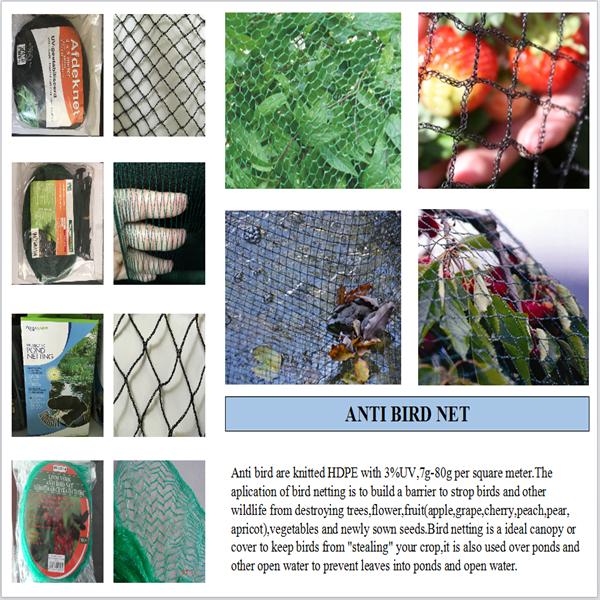 virgin HDPE plastic bird wire mesh/fruits cover anti bird netting  sc 1 st  Alibaba & Virgin Hdpe Plastic Bird Wire Mesh/fruits Cover Anti Bird Netting ...