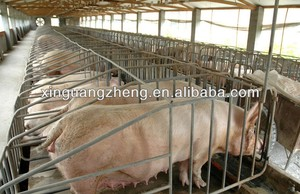 Professional design pig house for sale