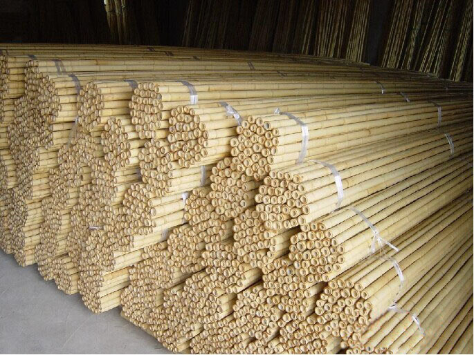 Colored Tonkin bamboo stick for plant