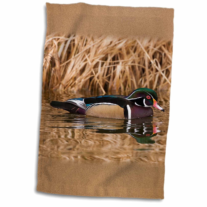 3dRose Danita Delimont - Artwork Wolfe - Ducks - Wood duck, George C. Reifel Bird Sanctuary, British Columbia, Canada. - 12x18 Towel (twl_187225_1)