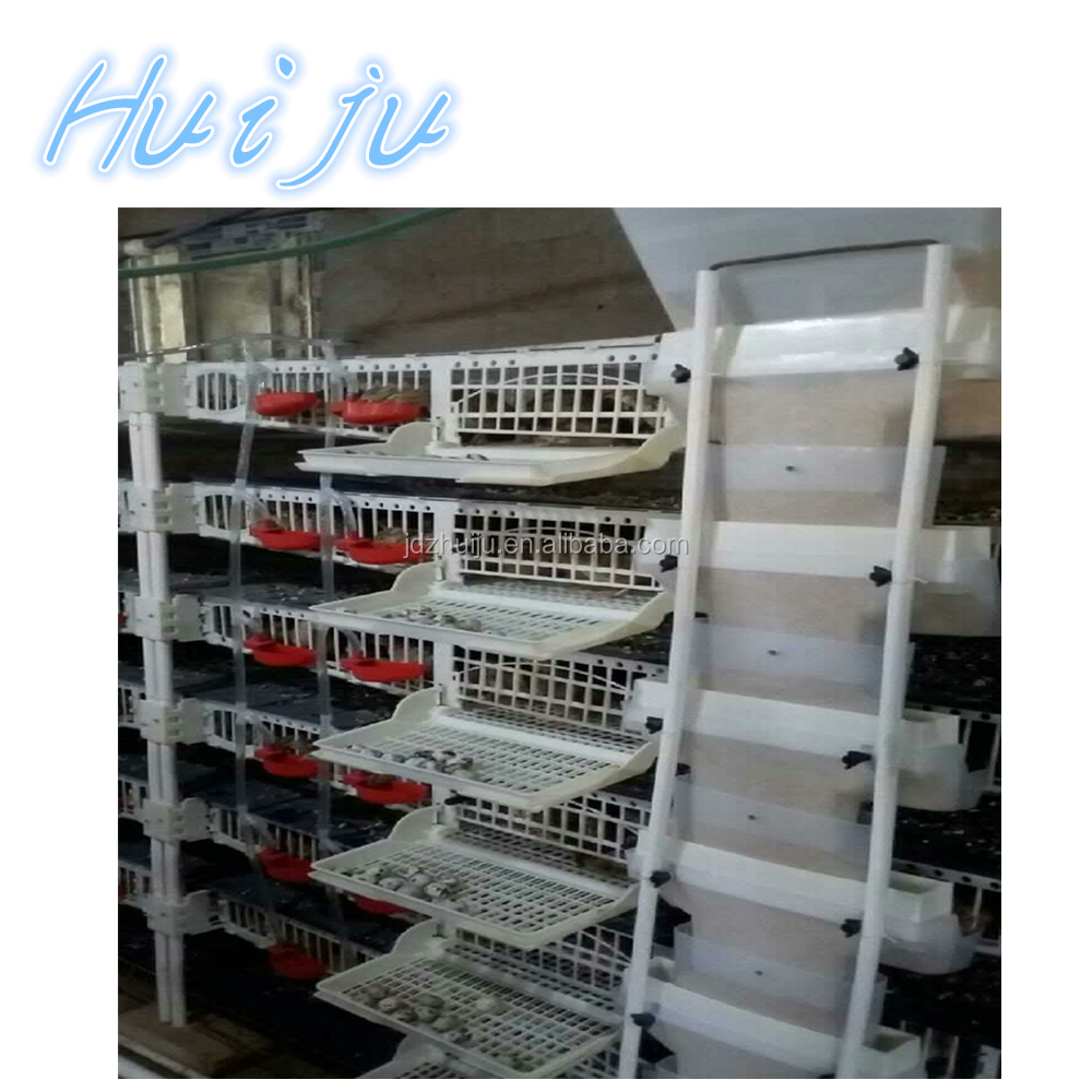 H type layer commercial quail cages for sale from China(Mainland)