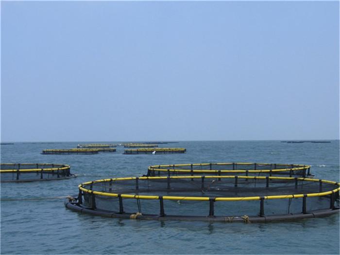 Hdpe flotante jaula para piscicultura mayor en asia buy for Jaulas flotantes para piscicultura