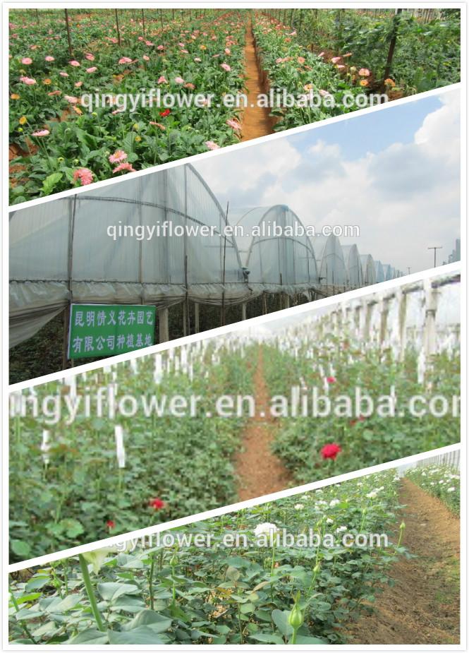 Groothandel Fresh Cut Gerbera Planten Bloem Kunstmatige