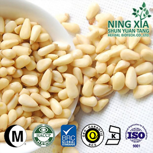 China New Crop Pure Red Pine Nuts shelled kernels 750 Top Quality
