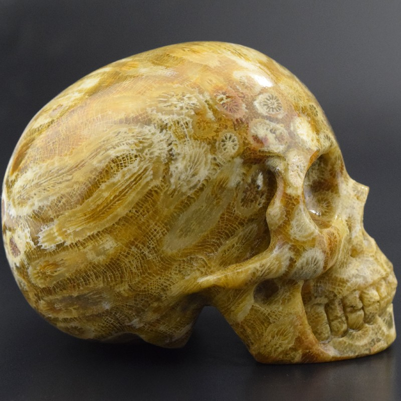 new arrive 2 inch hand carved Coral Fossil stone crystal skull for sale