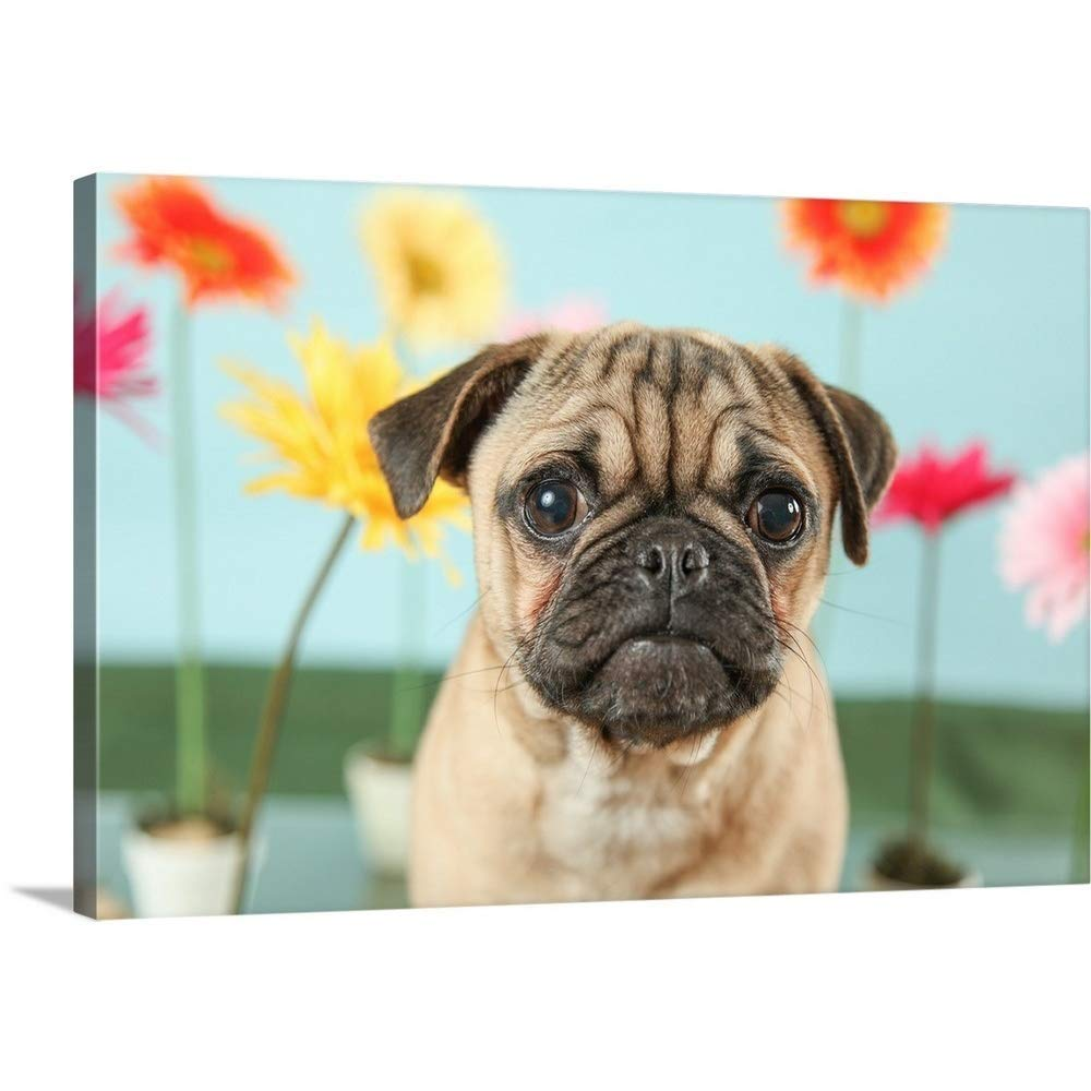 "GREATBIGCANVAS Gallery-Wrapped Canvas Entitled Flower Garden Pug by UTurn Studios 30""x20"""