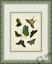 Antique Entomology II Wall Art Picture