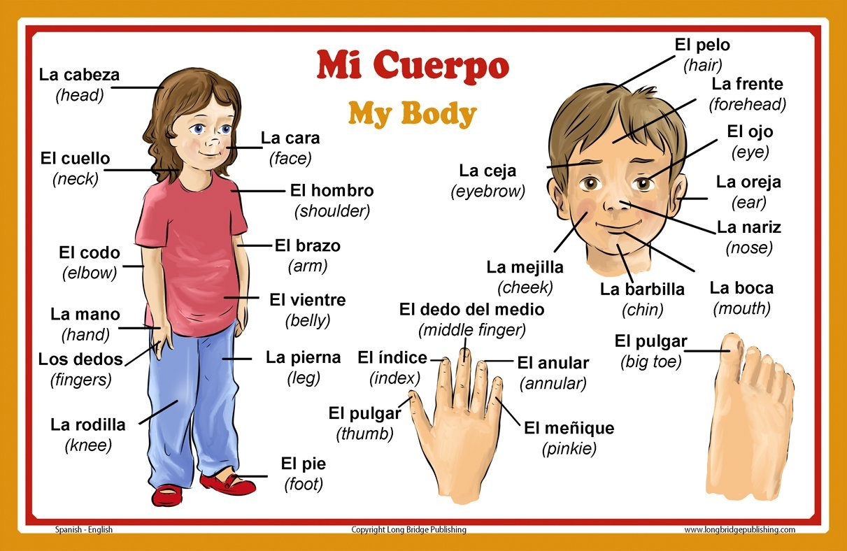 Buy Spanish Language School Poster Words About Parts Of The Body