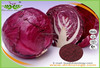 Hot selling 100% Natural Purple cabbage powder /Violet Cabbage Pigment /Red Cabbage Juice Powder