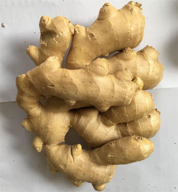 high quality fresh ginger/ air dried ginger export /air dried ginger whole