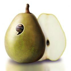 Pear New Variety- Angelys! High shelf-life
