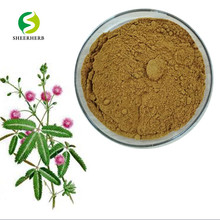 Chinese herbal Sensitive plant P.E. mimosa pudica powder