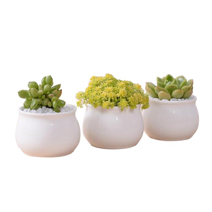 Moderna indoor decor extractor de cer mica blanca maceta - Macetas de porcelana ...