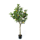 Ornamental artificial bonsai plant plastic fruit tree decoration, artificial lemon tree