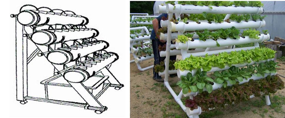Lettuce Strawberry Pod Pepper Celery Growing Greenhouse