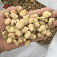 Export high quality bulk canned dry broad beans made in china