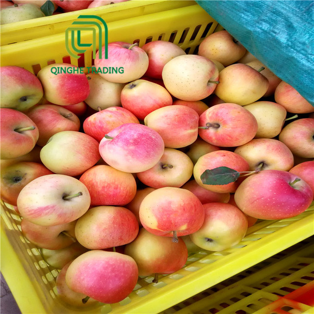 wholesale 2017 new arrival fresh fruit apple gala apple for sale