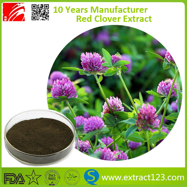 Manufacturer Supply Organic Red Clover Extract