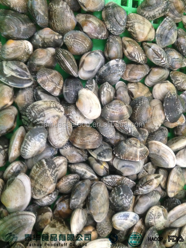 Sea Food Names Frozen Clam Vacuumized Packaging Seafood - Buy ...