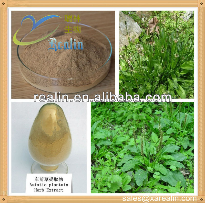 plantain seed extract powder plantain extract