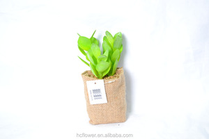 New style Artificial succulent plants planted in jute bag HC-YS66324