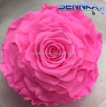 Luxurious ecuador rose artificial eternal huge pink rose flowers for luxurious ecuador rose artificial eternal huge pink rose flowers for valentine gift mightylinksfo