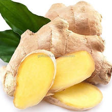 Natural Plant Extract Ginger Oil