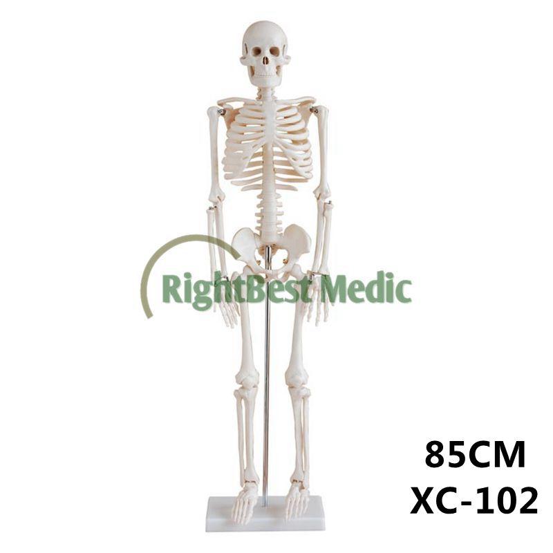 Artificial Plastic Human Skeleton 200 Bones Of Adult Human Skeleton
