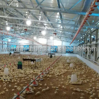 poultry farm business plan / chicken farm design / broiler farm building