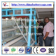 chicken cages sold in india