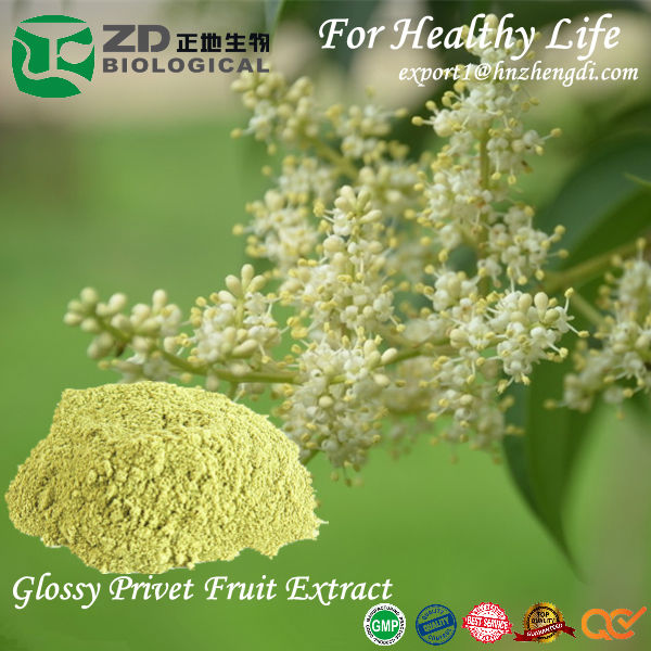 Glossy Privet Fruit Extract with High purity 30%, 90%, 95% Oleanolic acid customized specification for Anti-inflammatory medicin
