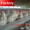 Factory reduction sale galvanized and quality fittings best egg laying chickens cages in zimbabwe