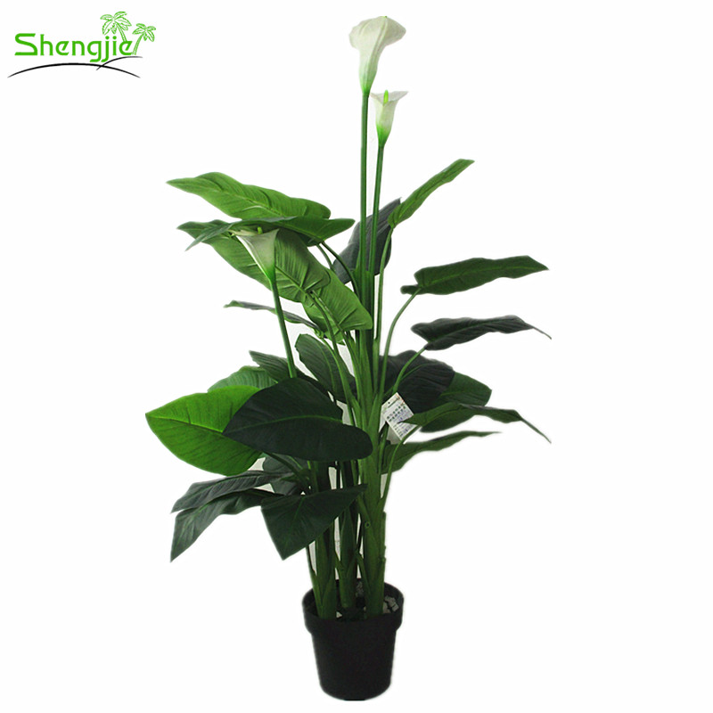 Wholesale Calla Lily Bonsai Plant Indoor Decorative Flower Bonsai