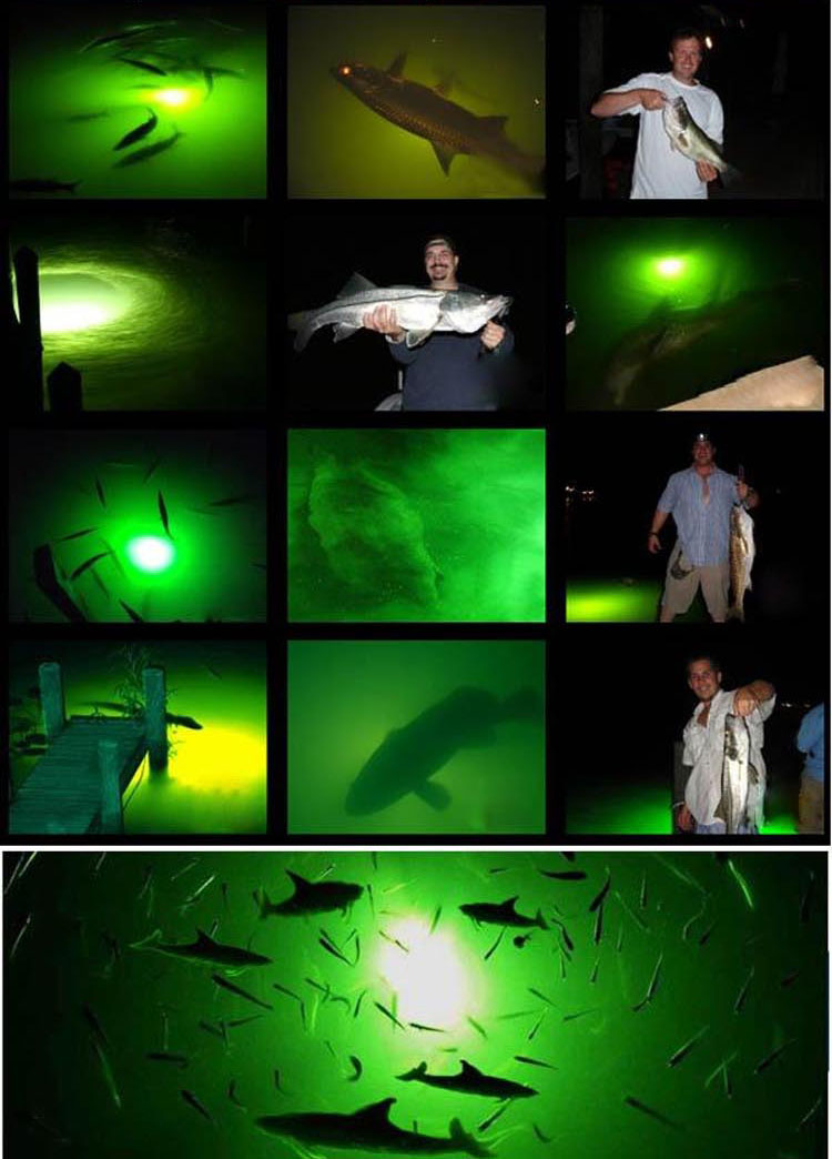 8w Stick Led Fishing Rod Tip Lights Underwater Ce&rohs