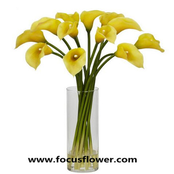 Newest Best Quality Name Of Flowers For Decoration Export Fresh Cut